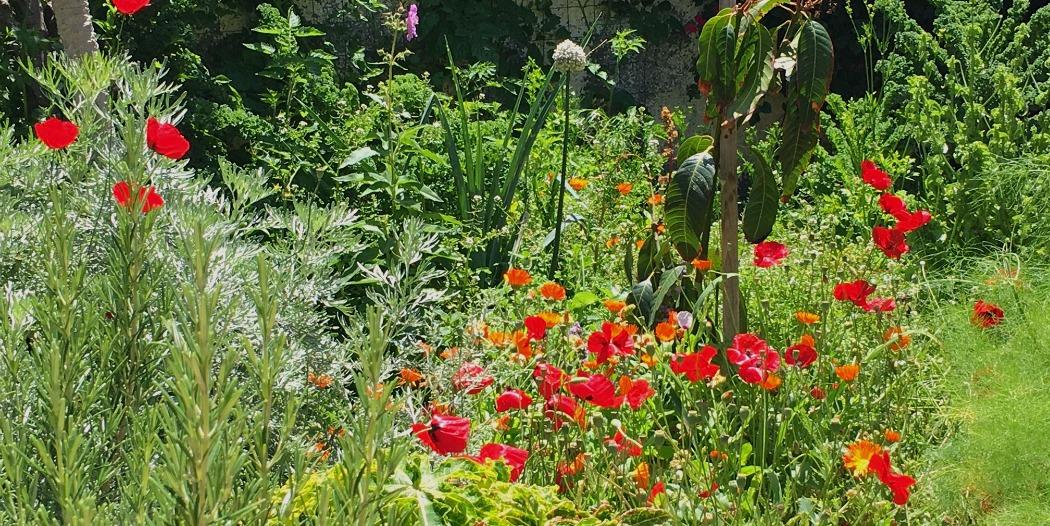 Ein kleiner Garten voll essbarem Grün ist das wertvollste Geschenk an sich selbst