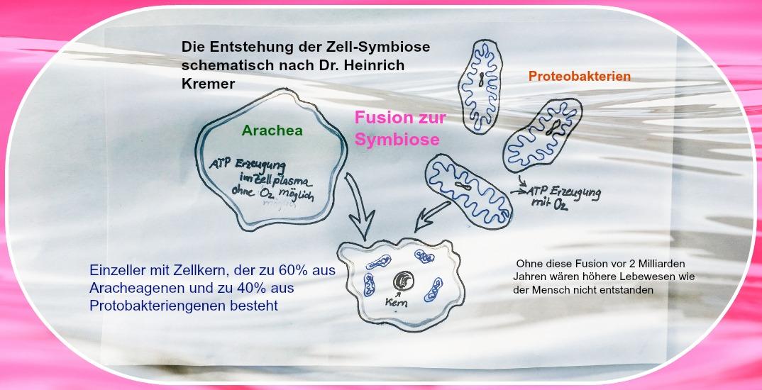 Warum unseren Mitochondrien vollen Schutz brauchen