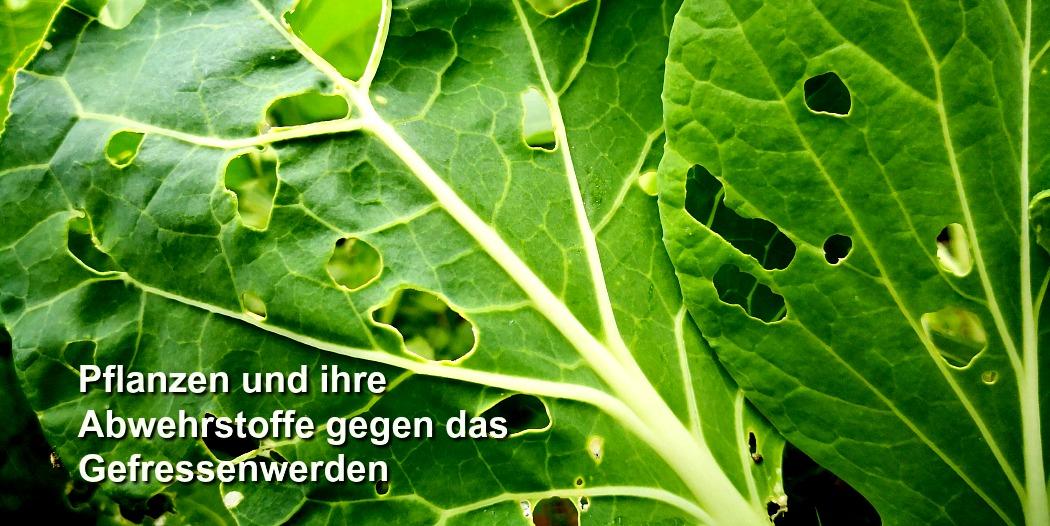 Meine 14 Tipps zur Vermeidung von pflanzlichen Antinährstoffen
