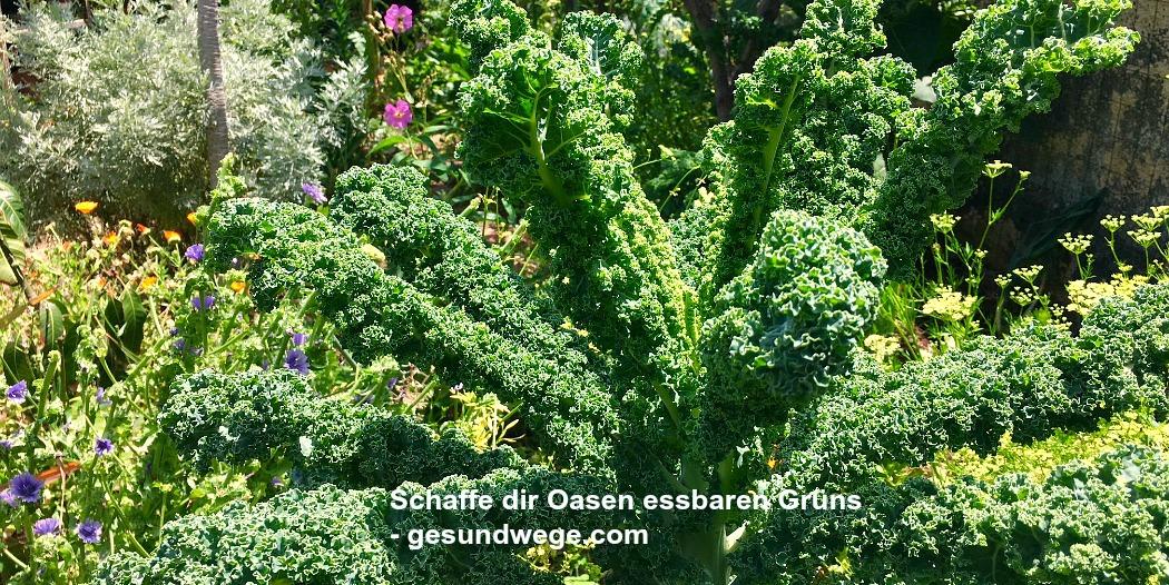 Wie du schnell und einfach deinen Lebensraum mit essbarem Grün aufrüsten kannst